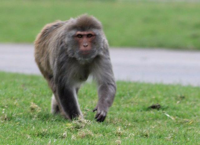 monkey-708565_1920
